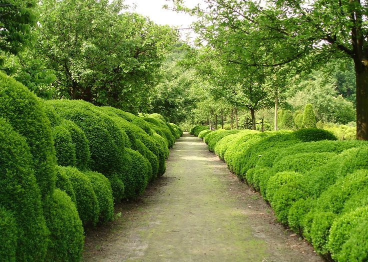 Cloud-Boxwood-Hedging-by-Belgian-garden-designer-Jacques-Wirtzs