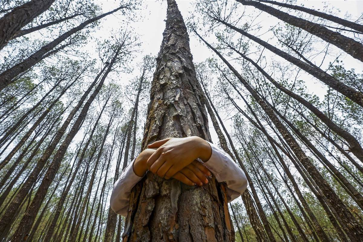 pc-140605-nepal-tree-hugging-mn-730_9424a42d6b3396d0c513915cb6c86abf.nbcnews-fp-1200-800